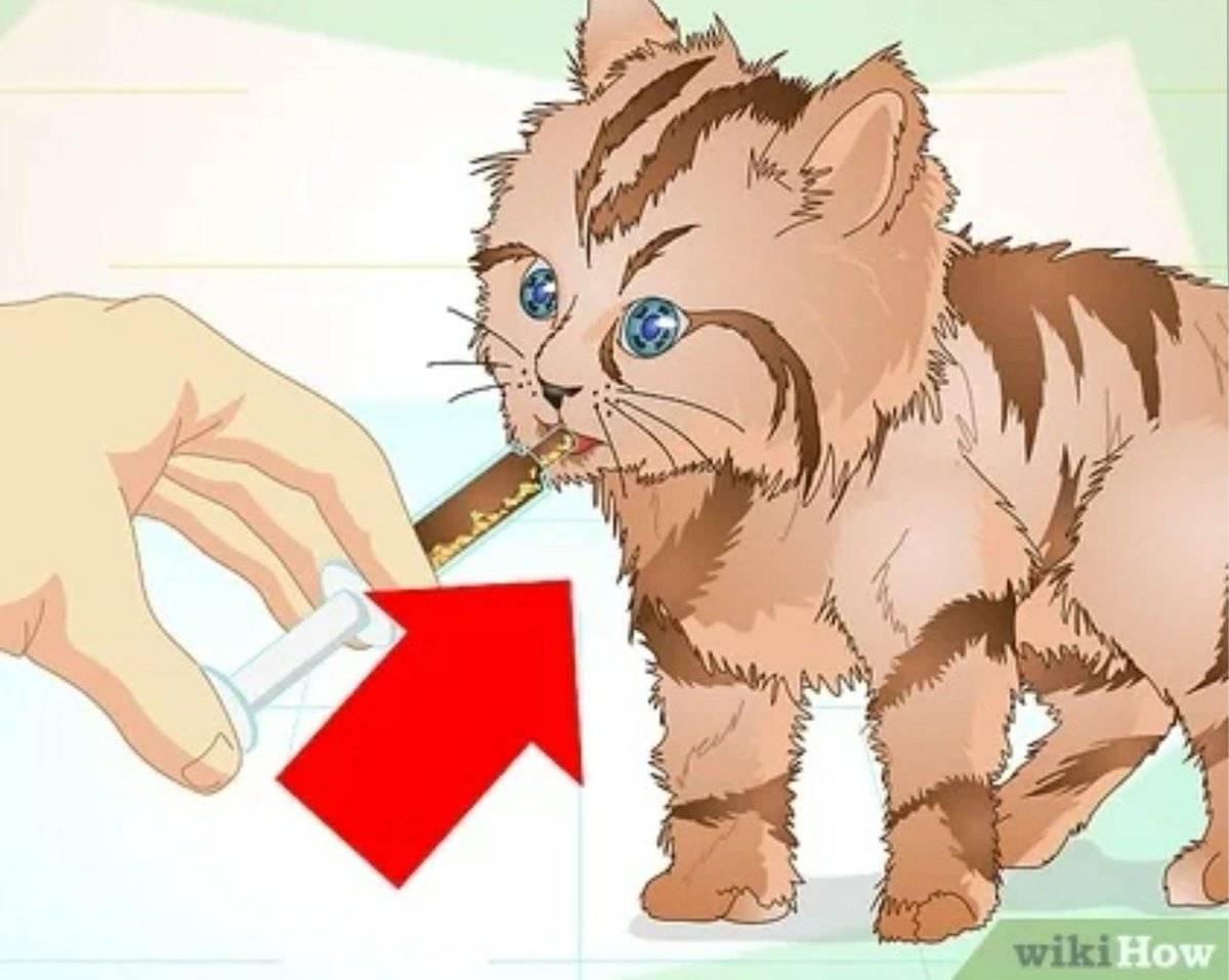 Что делать если кот подавился: симптомы, первая помощь