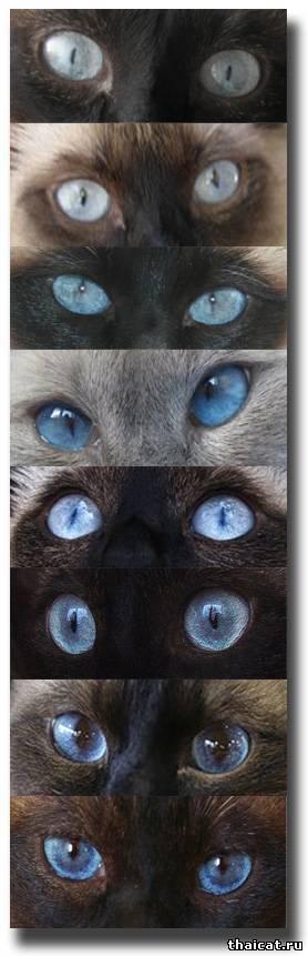 Котёнок появился в доме. вопросы о котятах - кошки