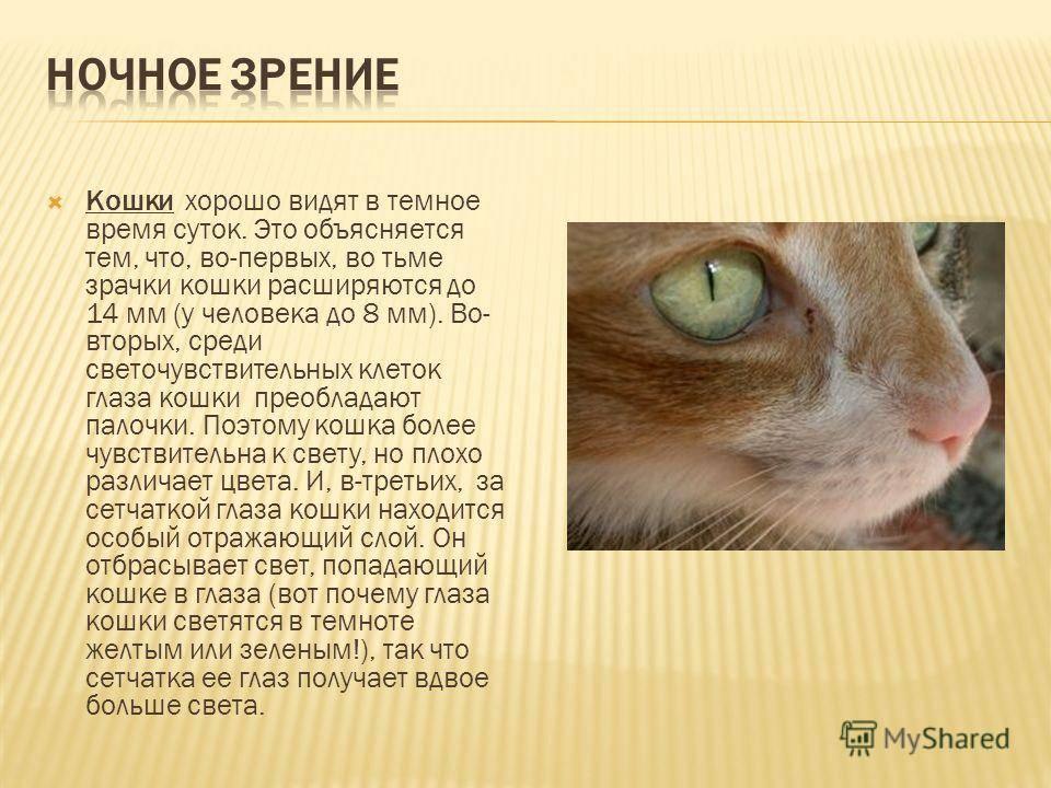 Строение глаза кошки.