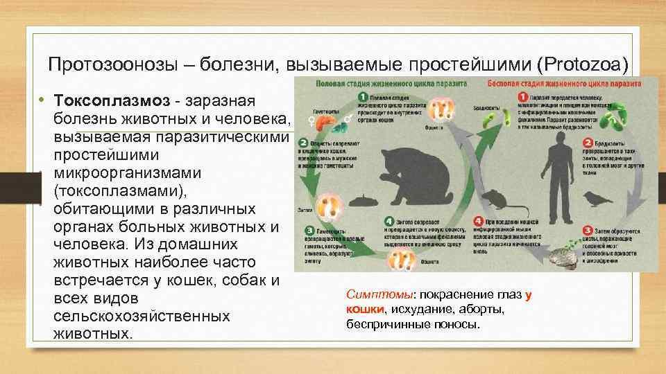 Инфекционные болезни кошек  виды, симптомы и лечение инфекций котов