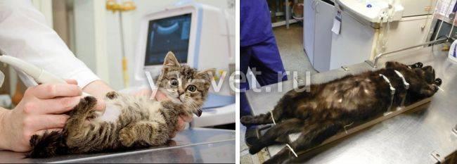 Стерилизация кошки: когда можно проводить и зачем это делать, как происходит операция?