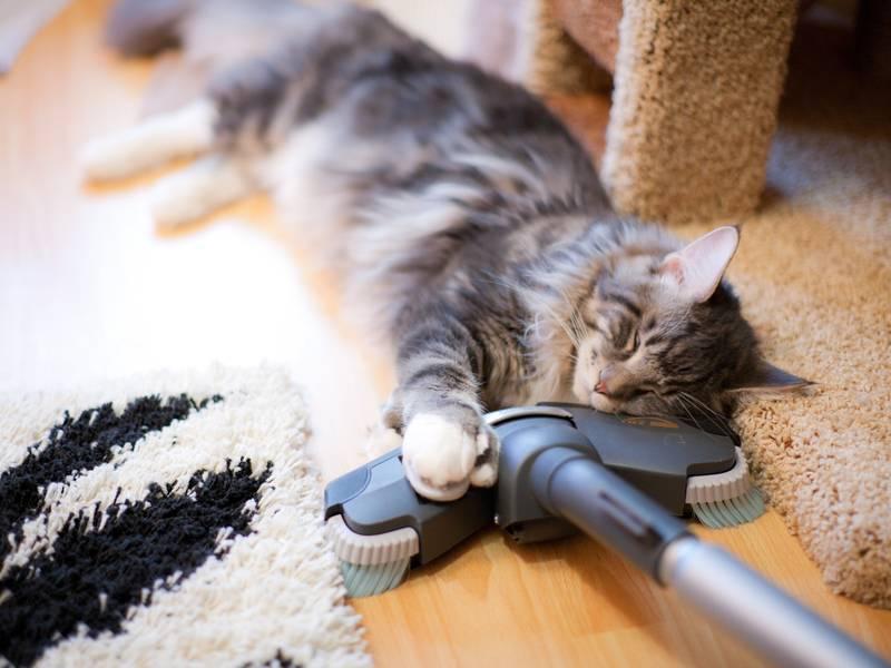 Из-за чего кошка очень сильно линяет и как ей можно помочь, видео