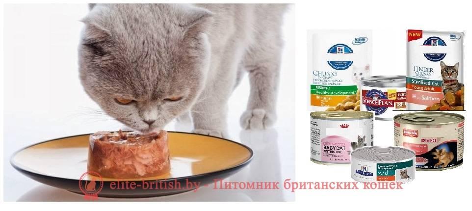 Чем кормить шотландских кошек?