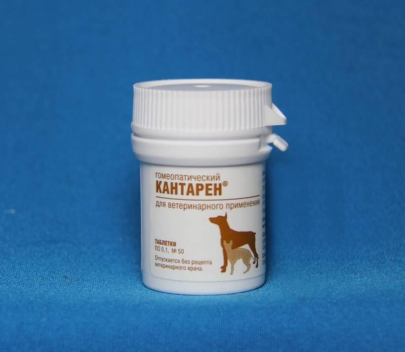 Кантарен инструкция по применению для собак. кантарен – инструкция по применению для кошек, показания, дозировка. применение раствора для инъекций