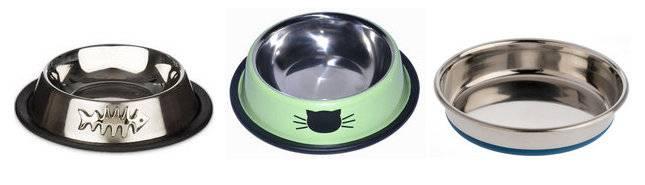 Что купить для содержания кошки: топ-8 вещей первой необходимости