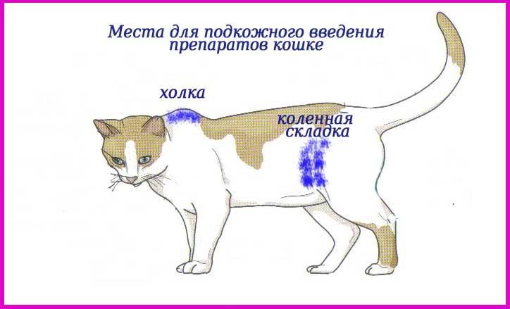 Уколы и капельницы — как правильно проводить лечебные манипуляции кошкам в домашних условиях