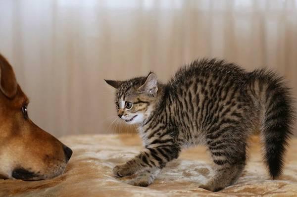Почему кошки боятся собак: основные причины почему кошки боятся собак: основные причины