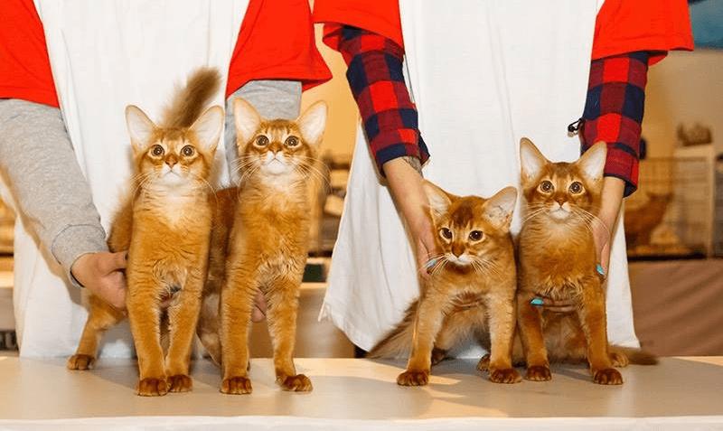 Гамавит для кошек – назначение, инструкция, отзывы