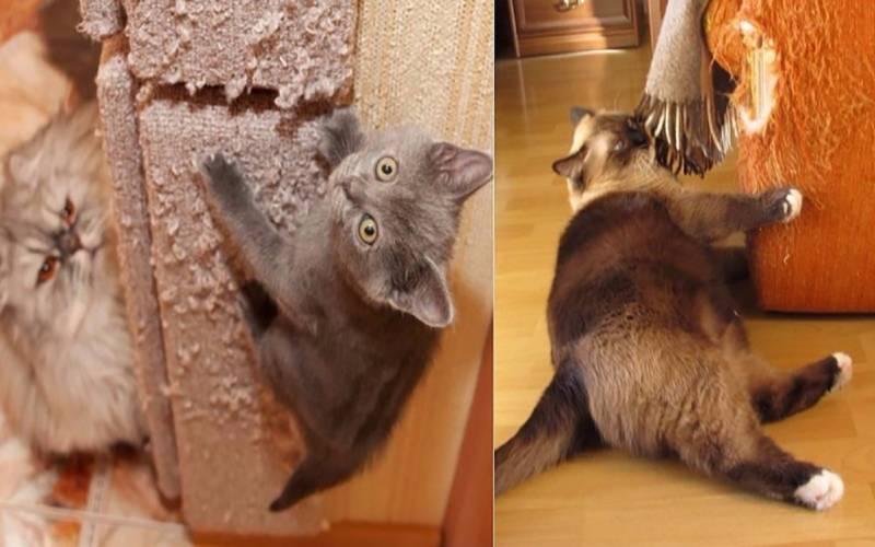 Что делать если кошка дерет обои