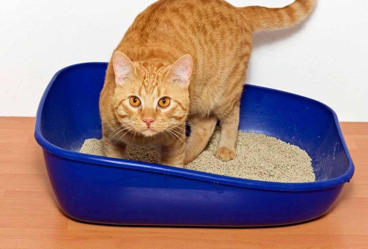 Как приучить котенка к лотку быстро и без нервов