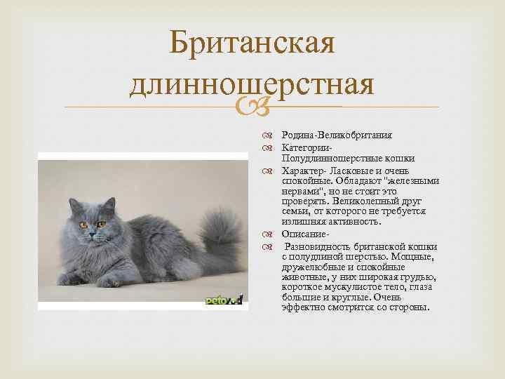 Все, что вам нужно знать о длинношерстных породах кошек