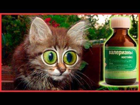 Можно ли давать валерьянку коту: советы ветеринаров
