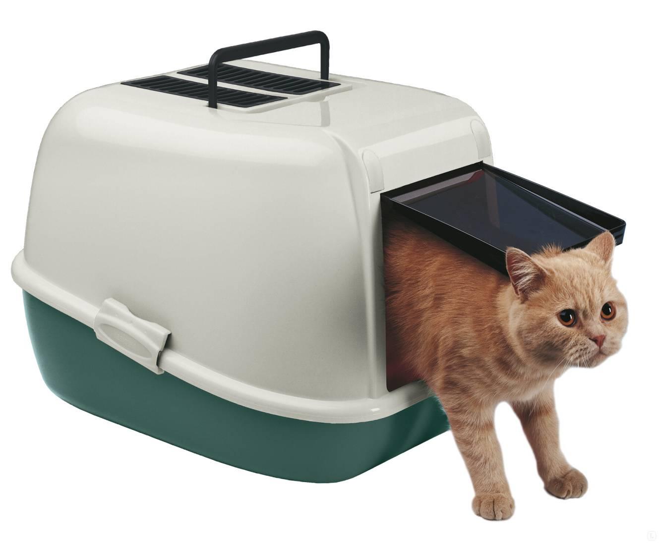 Лоток для кошки - какой лучше выбрать лоток для кошки - какой лучше выбрать