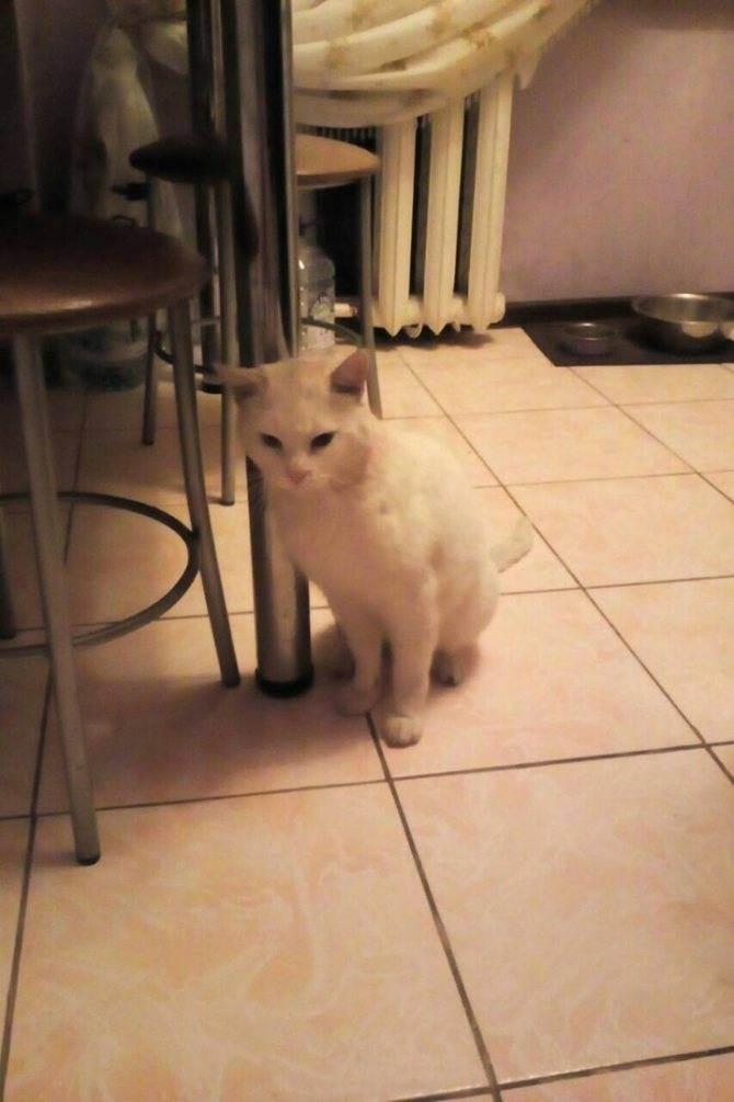 Как приучить кошку к ласке, как приручить кота к себе?