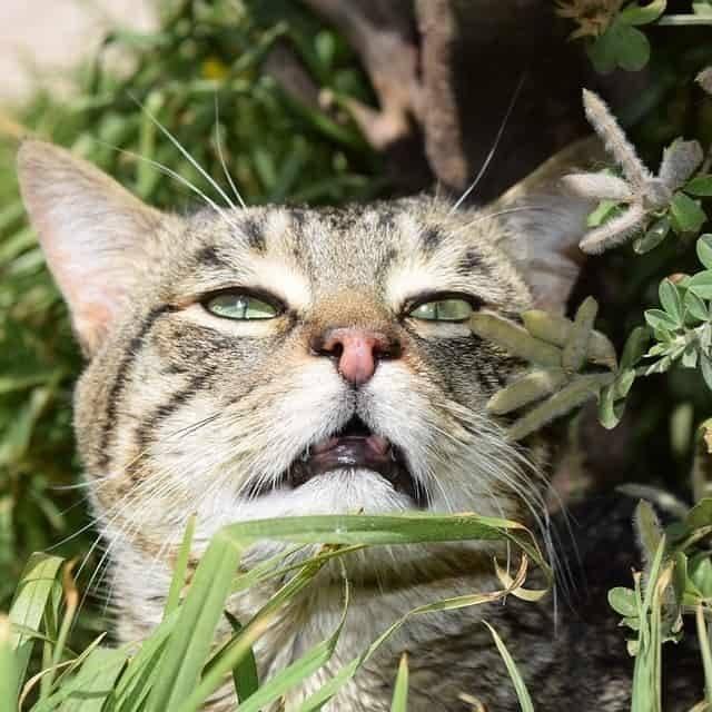 Чихающий кот: по каким причинам появляется симптом, как лечить дома