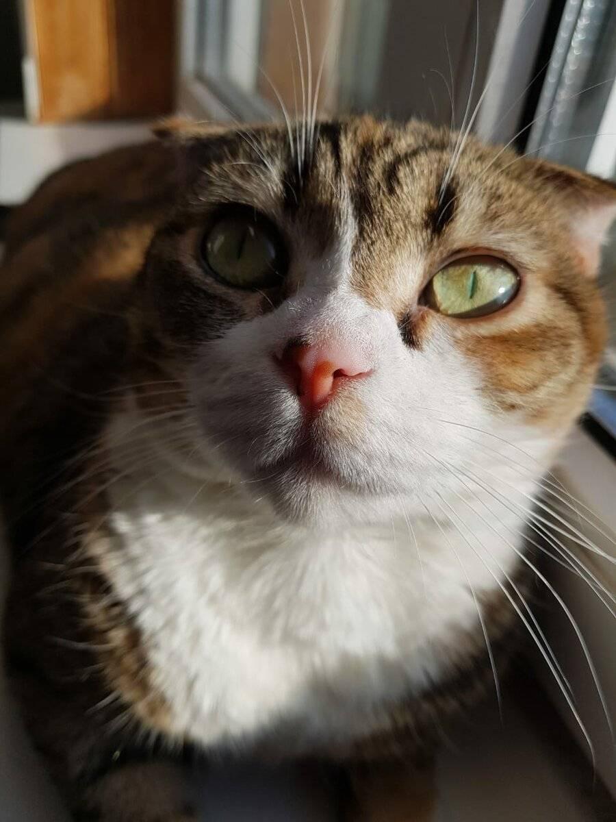 Почему кот в доме постоянно смотрит в один угол и орет - кошки и собаки простыми словами