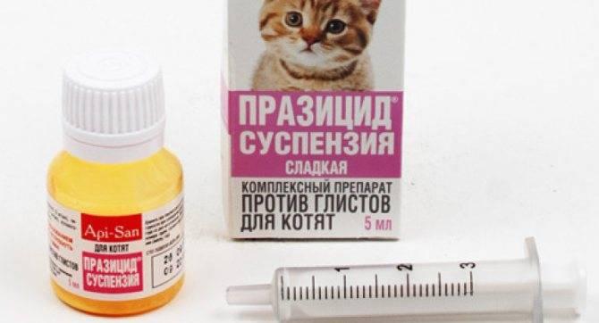 Суспензия от глистов для котят: виды и эффективность
