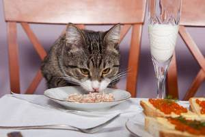Какие крупы можно давать кошкам и как правильно сварить кашу