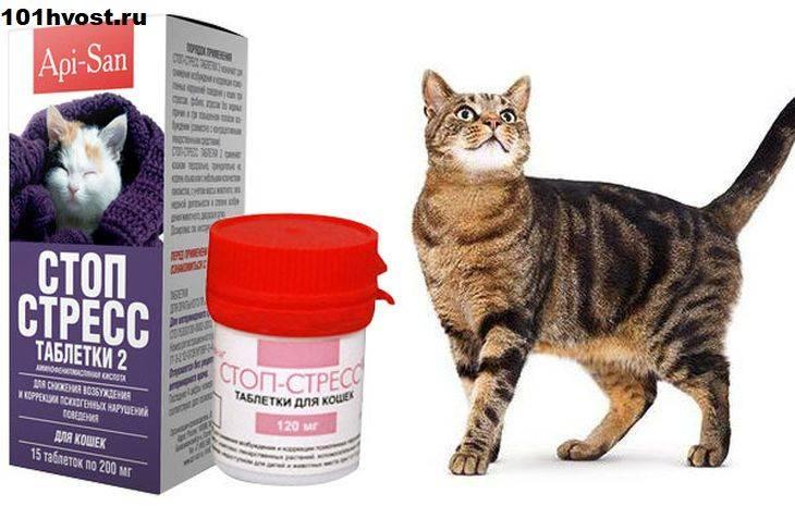 Обзор эффективных успокоительных средств для кошек, отзывы