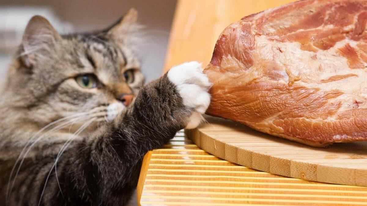 Как накормить кота, если он отказывается от еды: основные методы
