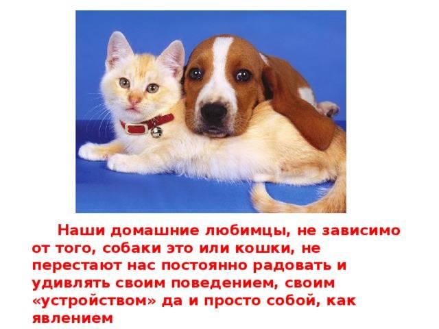 Интересные факты о кошках для детей и взрослых: познавательное о наших усатых питомцах
