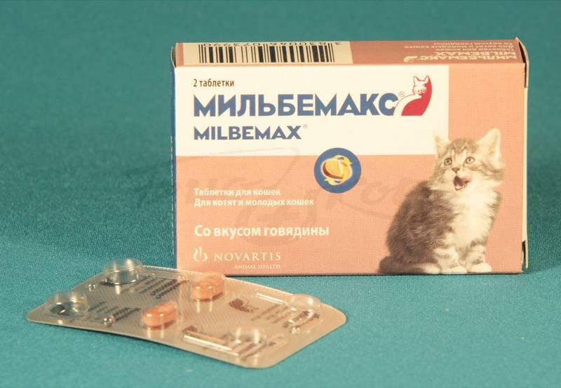 Как давать мильбемакс котенку перед едой или после