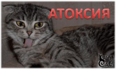 Вредно ли стричь кошек и для чего это нужно?