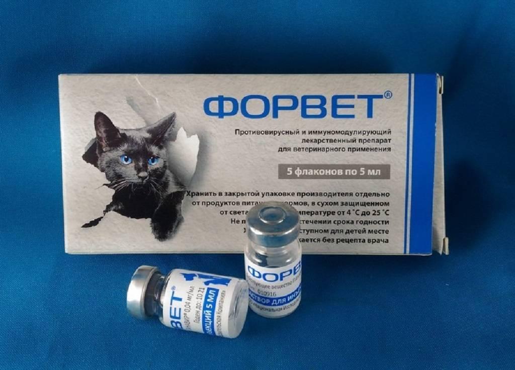 Форвет для кошек: инструкция по применению иммуномодулирующего препарата