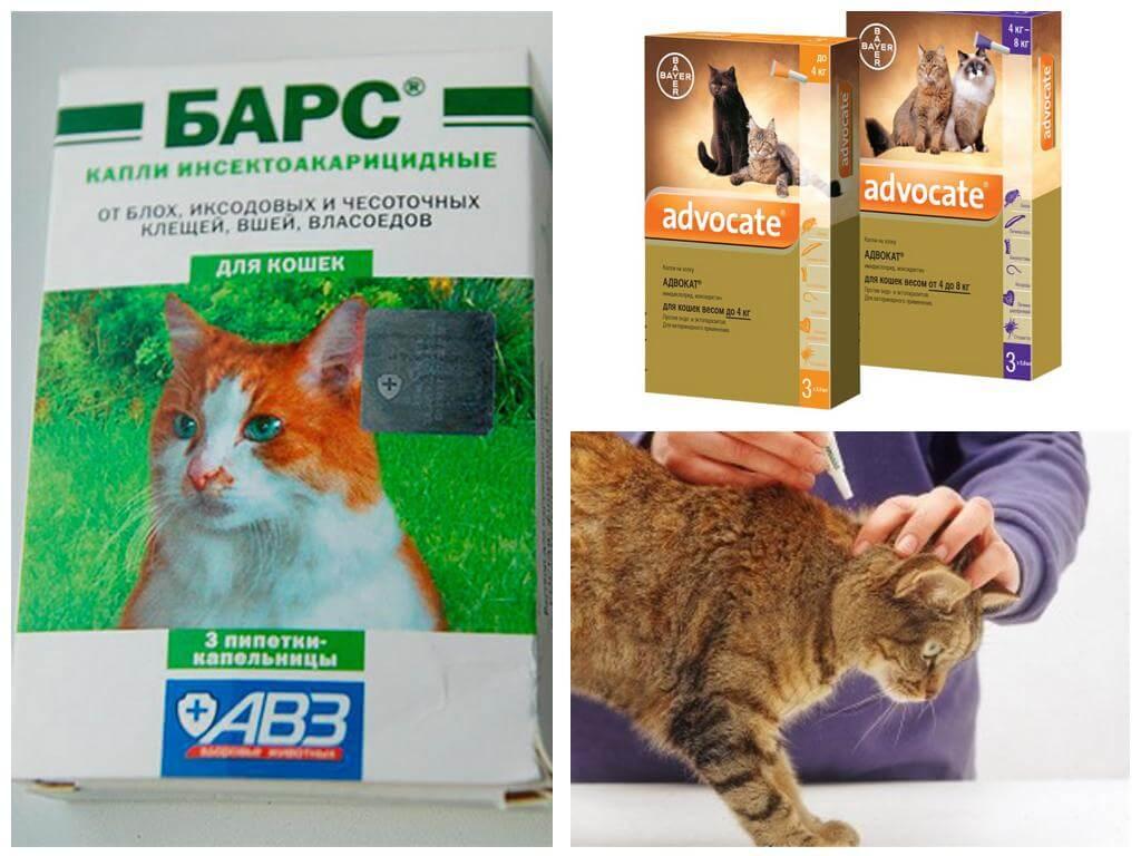 Самые популярные народные средства от блох у кошек