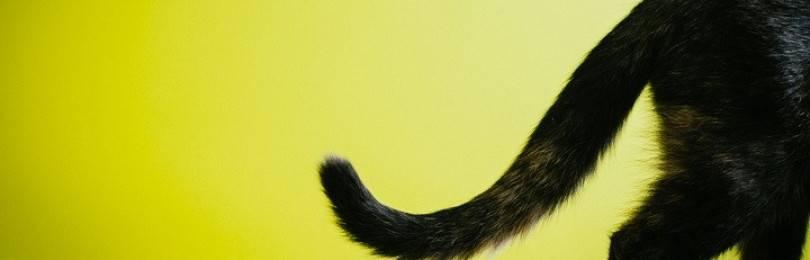 Почему у кошки облазит хвост?