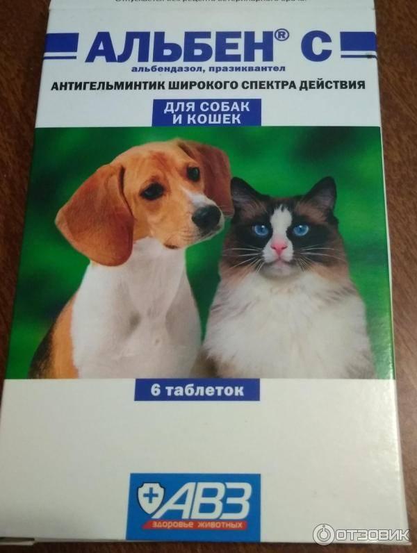 Альбен: описание, характеристика и инструкция по применению препарата для кошек