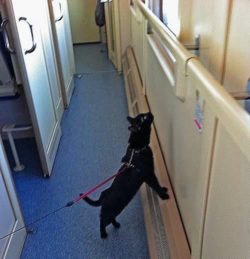 Как перевезти кошку в поезде: правила перевоза кошек в поезде как перевезти кошку в поезде: правила перевоза кошек в поезде