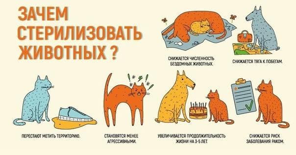 Кастрация кота