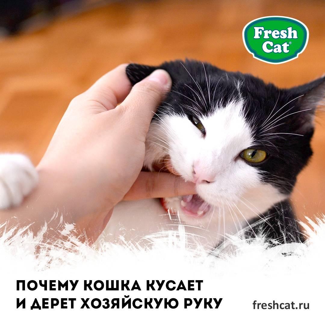 Что делать, если кошка грызет лапы до крови?