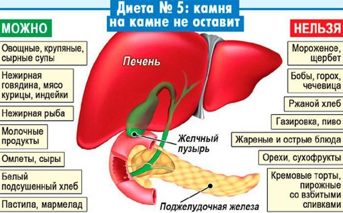 Симптомы холецистита у кошек, прогнозы, лечение и профилактика заболевания