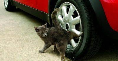 Что делать если кот метит в квартире: как бороться и отучить от меток