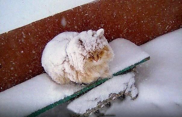 Как кошки переносят холод?
