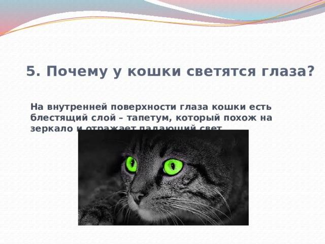 Почему у кошек глаза светятся в темноте