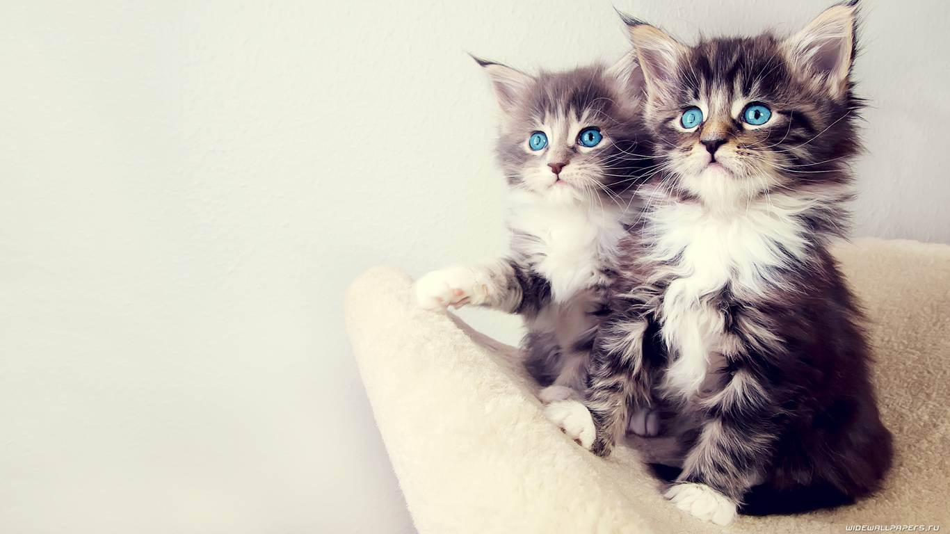 Какие цвета различают кошки?