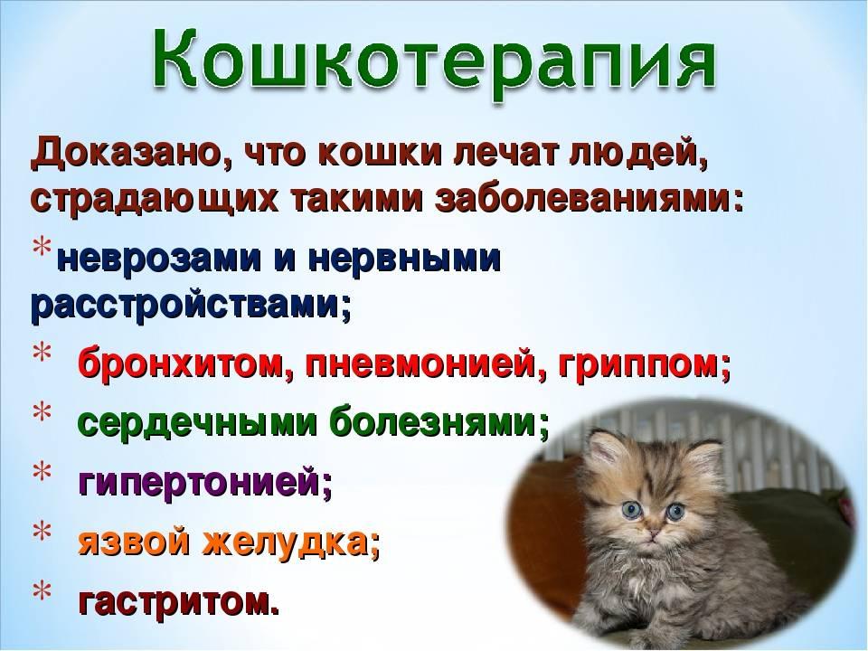 Фелинотерапия (кошкотерапия): кошки лечат болезни людей.