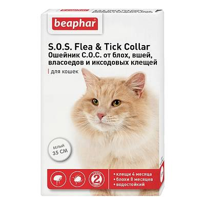 Выбираем противоблошиный ошейник для кошек и котят