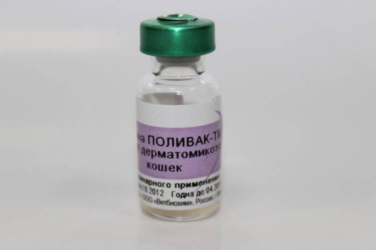 Вакцина поливак для кошек и собак: инструкция по применению, отзывы - бьютикул