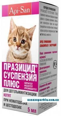 Как и чем кормить котят в 3 недели: советы и рекомендации