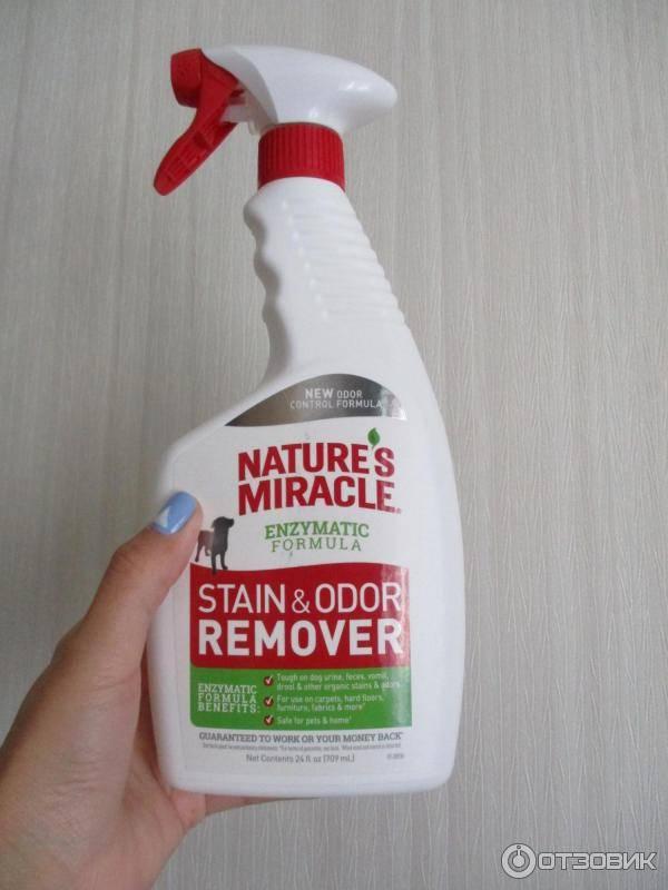 Как избавиться от запаха кошачьей мочи в квартире: 17 лучших средств для устранения вони