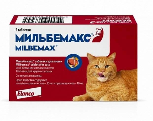 Капли для кошек от блох и клещей