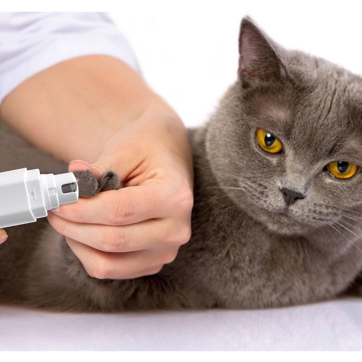 Удаление когтей у кошки уход после операции