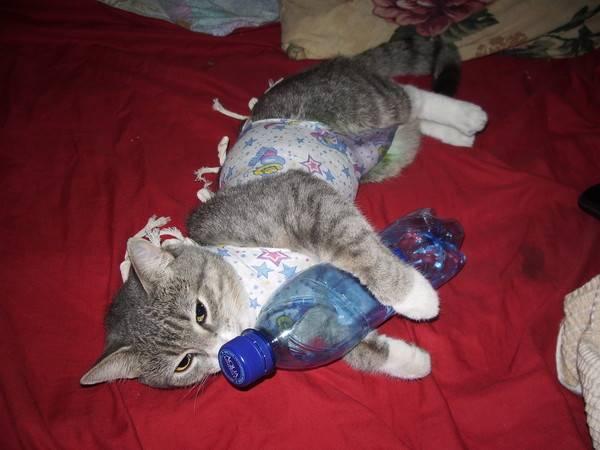 Первая течка у кошки: когда начинается и что делать
