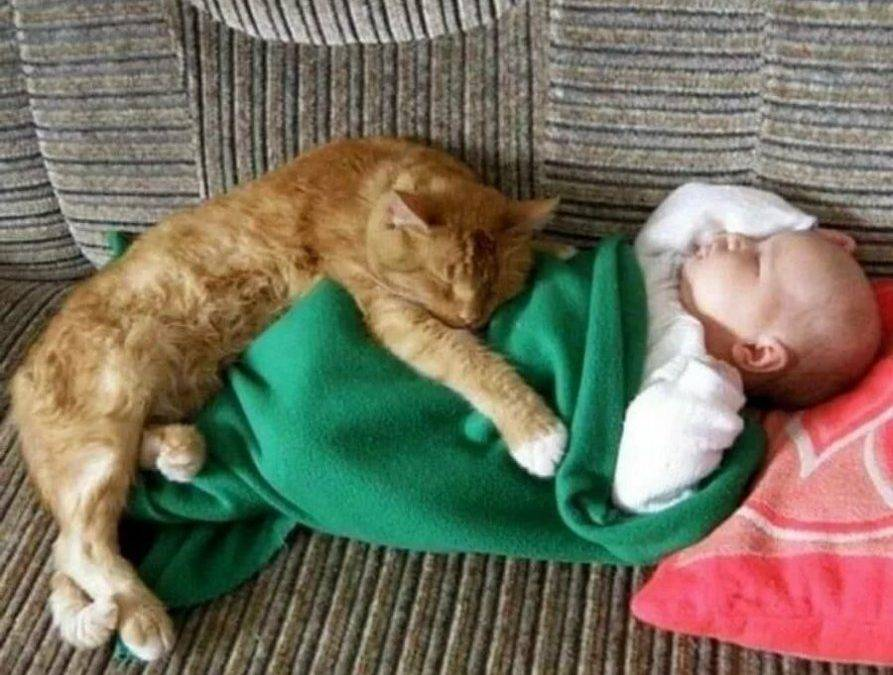 Кошка и новорожденный ребенок в доме