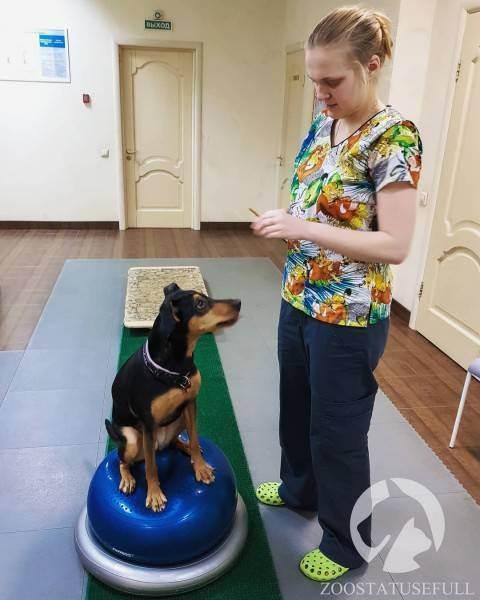 Болезни скота | правила ветеринарной терапии