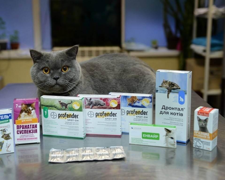 Как вывести глистов у кошки в домашних условиях: эффективные лекарства, чтобы проглистогонить питомца